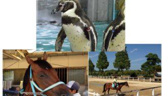 ペンギンと馬
