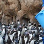こぼれ話~ペンギンツアー